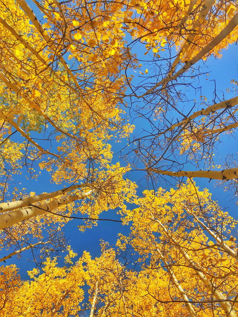 Top Places to view Fall Foliage in Colorado Springs
